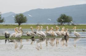 Φωτογραφίες μελών της ΕΦΕ Κρήτης